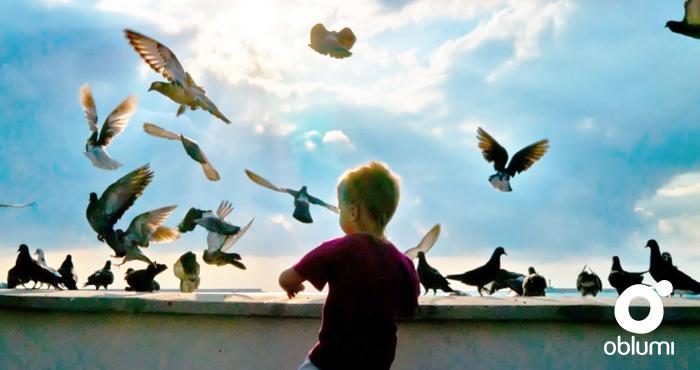 Portada paz palomas