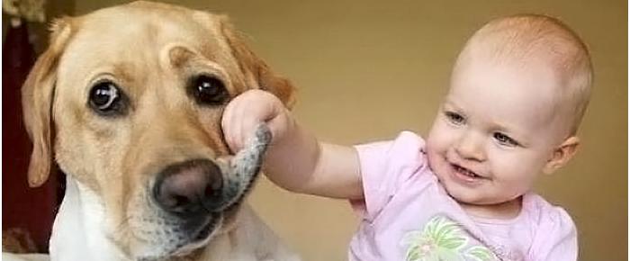 bebe perrerias