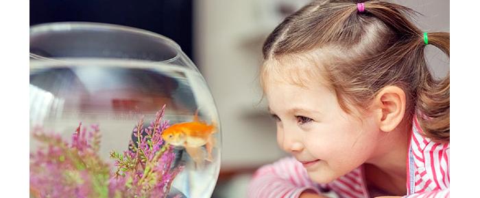 niña peces